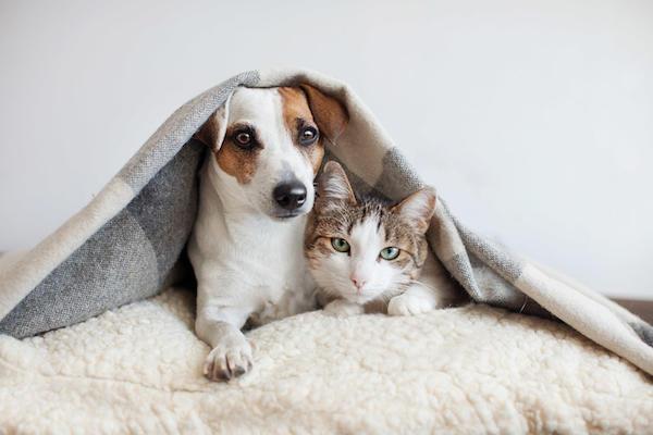 http://www.jupitervet.com/wp-content/uploads/2019/11/pets-compressed-600x400.jpg